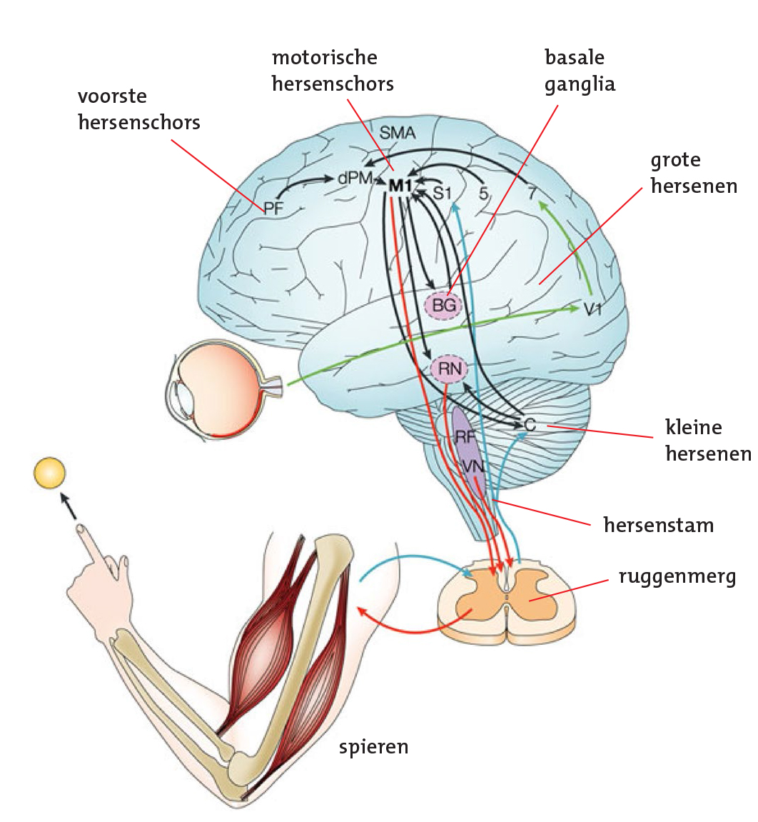 symptoms of parkinsons disease essay